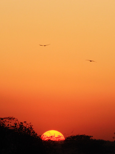 pakistan sunset nature birds evening islamabad