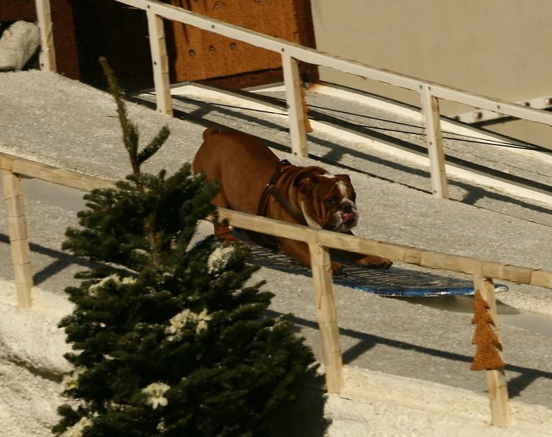 Snow Board Doggie