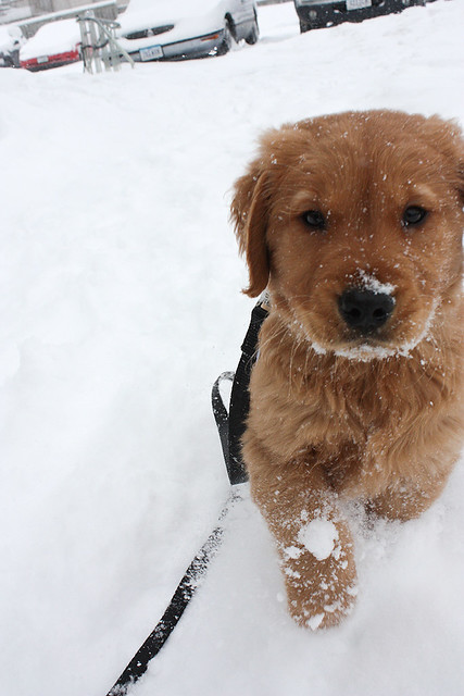 snow is serious business