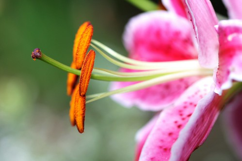 Flower | by Jeremy A.A. Knight