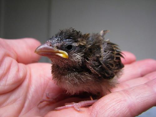 Baby Bird | by audreyjm529