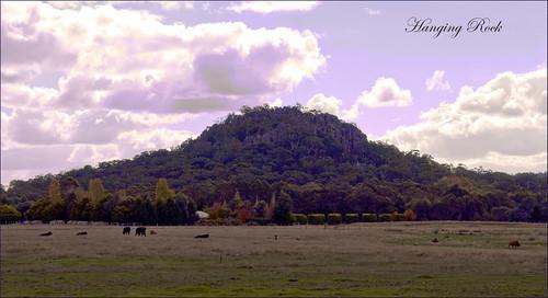 landscape geotagged rocks cattle australia eerie victoria volcanic monoliths hangingrock woodend picnicathangingrock violetfilter teelawn mtdiogenes solvsbergite hesketplains ©tinabarker