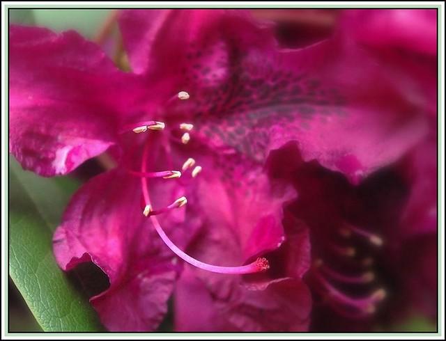 Erotic flower