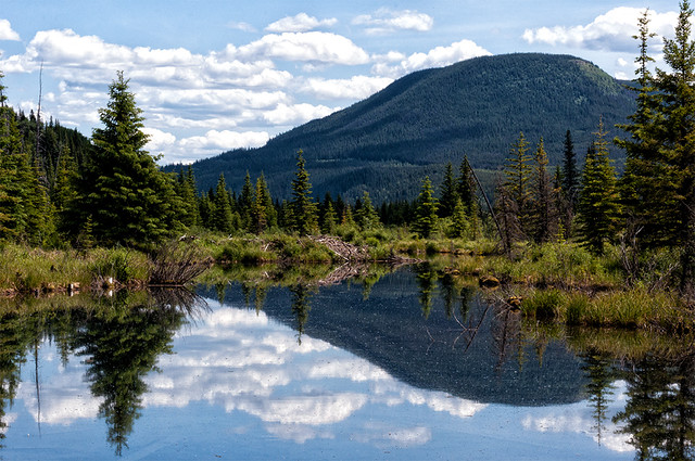 Bullmoose Marshes 01