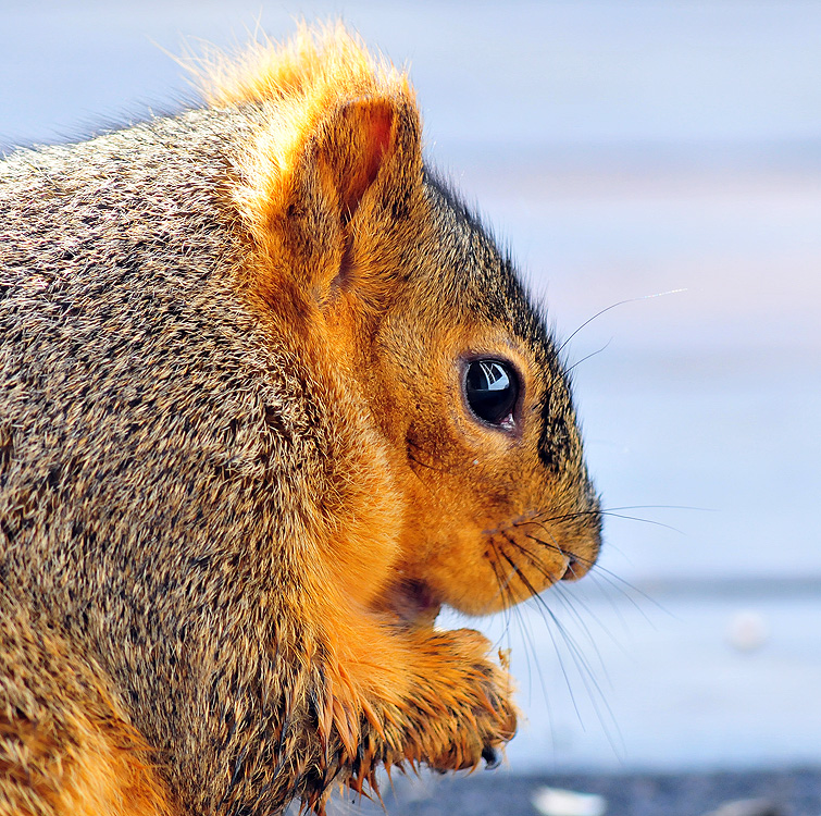 Squirrel happiness