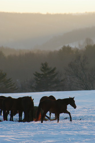 winter sunset horses snow mountains december farm westvirginia 2009 summerscounty jumpingbranch