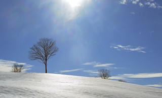 Tree, Snow, Clouds and Sun
