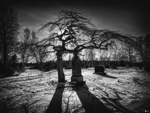 bw snow canada cemetery novascotia headstones graves capebreton tombstones cs4 blackbrook photomatix theworldwelivein mynemesis d700 thatstupidtree niksfilters blackbrookcemetery hdr5ex