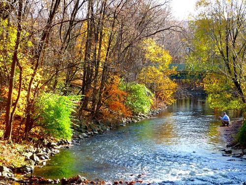 nature pennsylvania foliage bethlehem