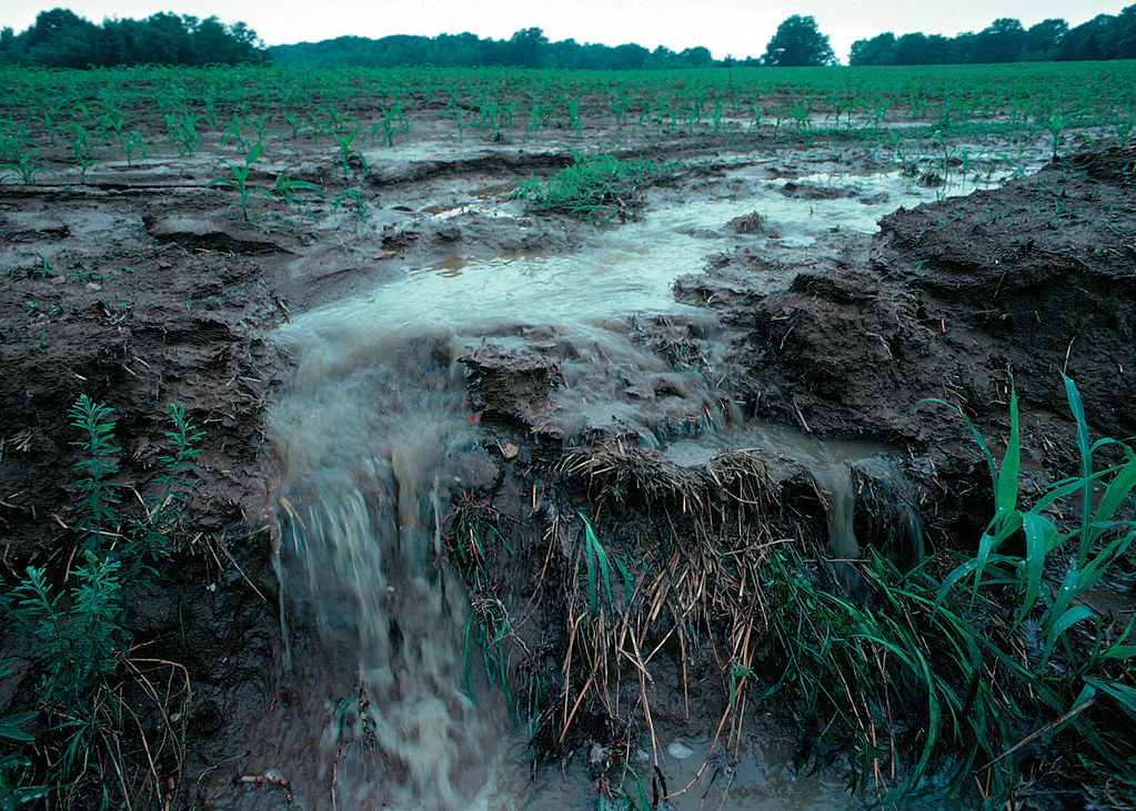 Agricultural runoff   Runoff of nutrients from farm fields i…   Flickr