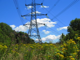 Pylons through woodland | by Victoria_Hume