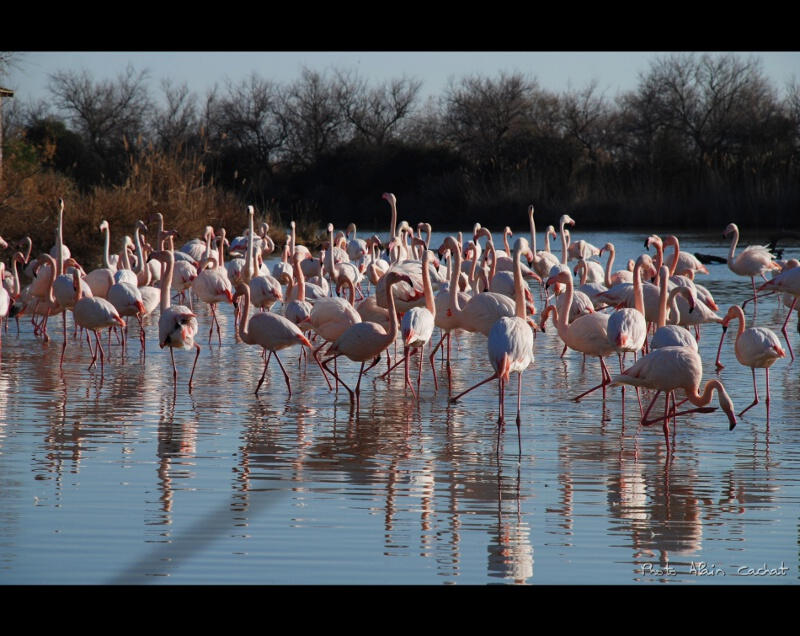 Camargue (4) by Alain Cachat