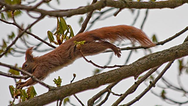 Egern Hop