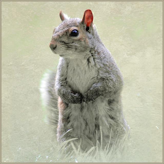 got nuts?