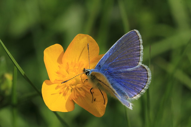 Cup And Fly Of The Butter Variety