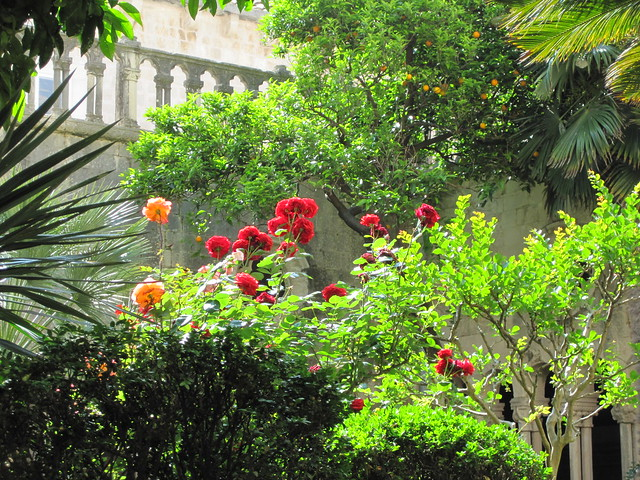 The garden of the Franciscan monastery in Dubrovnik