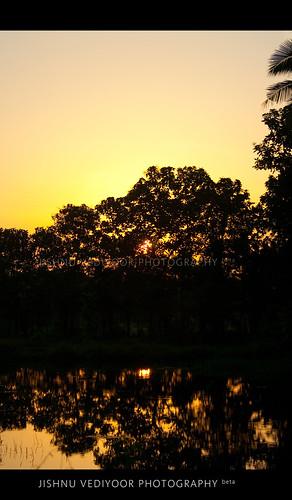 sunset sun india tree nature water beauty silhouette photography kerala cochin periyar aluva jishnuvediyoor vediyoor thiruviranikkulam