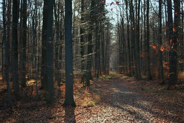 Waldszene / Forestscene