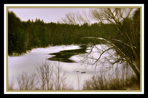trees winter brown lake snow tree ice nature water wisconsin landscape photography frozen photo donna weeds freezing eagleriver icy thaw wisconsinriver thawing dgehl donnagehl