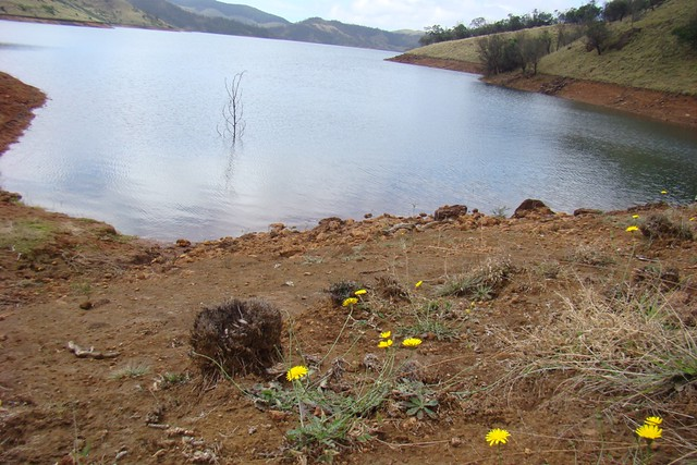 Nilgiris - Wildflowers on Lakkidi lakeshore