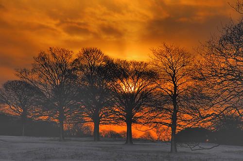 uk winter sunset red england cloud sun snow colour tree nature bbc hull looknorth chengi