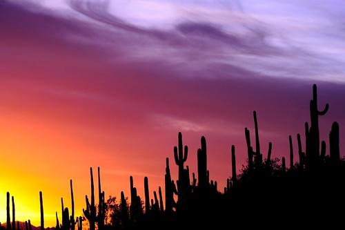 Saguaro Silhouette | by QQQQcon