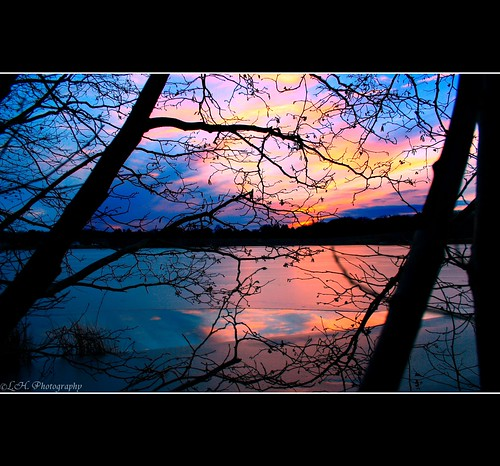 pink blue trees winter sunset sky orange black ice yellow frozen pond branches melted canonrebelxt img0028