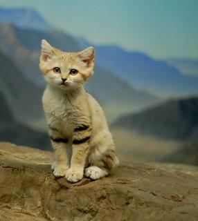 Posing Sand Kitten   by MrGuilt