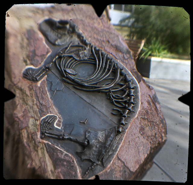Wombat (Urban Grammar, shot on World TTV Day 19 June 2010) nº 33