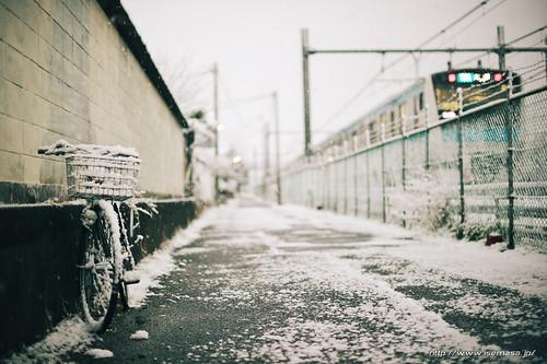Snowy morning   by asamesi_jp