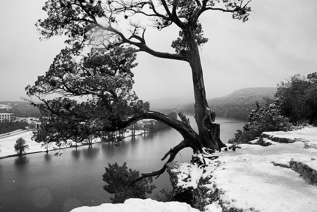Snowy Austin