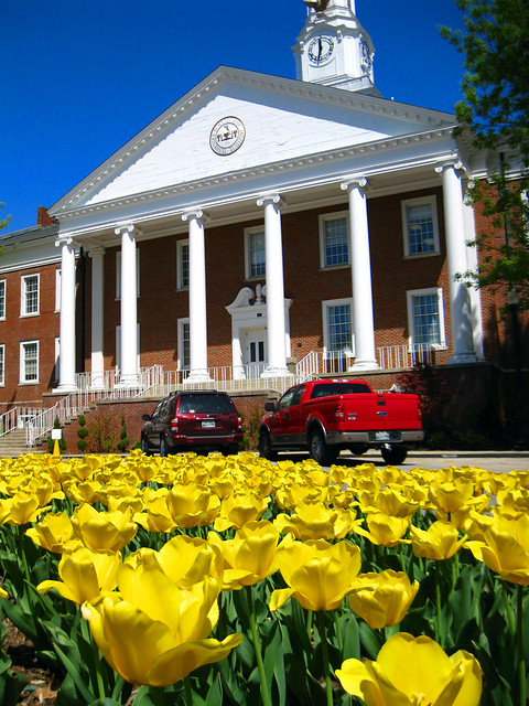 Derryberry Hall, Yellow Tulips, TTU Campus, Cookeville, TN