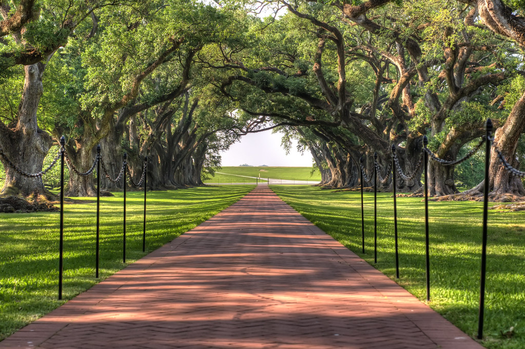 River road leading from Oak Alley Plantation by atxryan