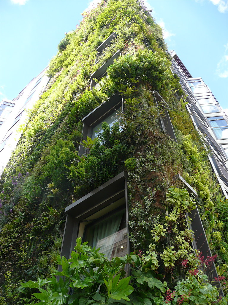 Green wall at the London Athenaeum hotel
