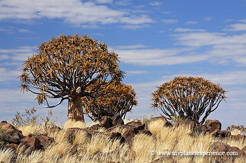 Namibia experience : Keetmanshoop forest