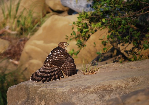sunset canada bird nationalpark feathers newbrunswick kouchibougauc