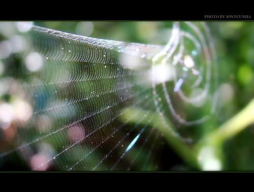 NA TEIA DA ARANHA- In The Net of Spider- FRONT PAGE | by jonycunha