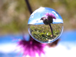 Autumn Flower (A Thistle)