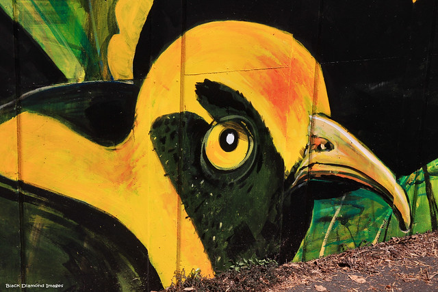 Sericulus chrysocephalus - Male Regent Bower Bird (Treasures of the Tweed Mural Project)