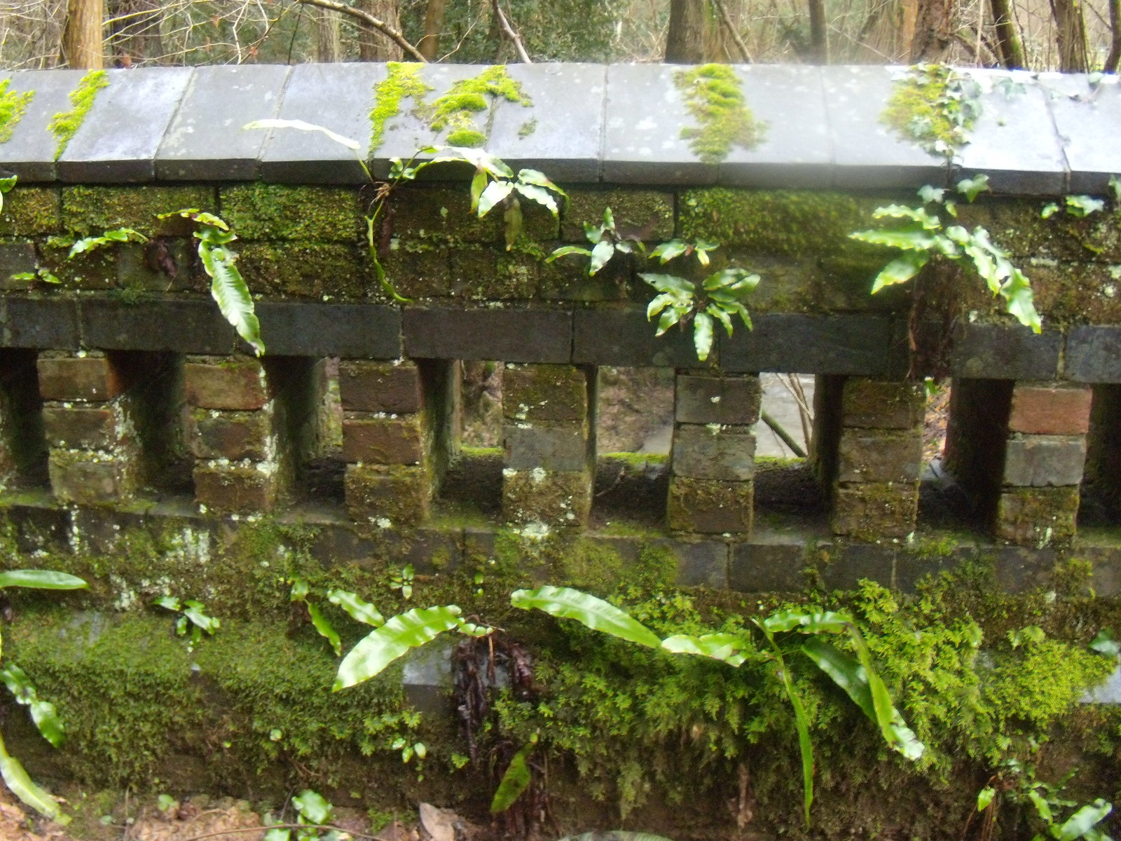 Tropical bridge Witley to Haslemere