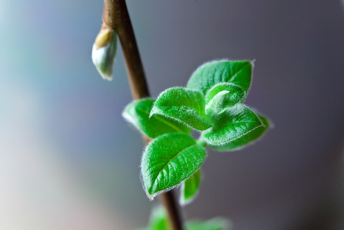 Young Leaves | by saebaryo
