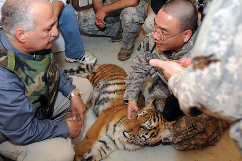 Army veterinarians, an ill tiger cub and a zoo in Iraq