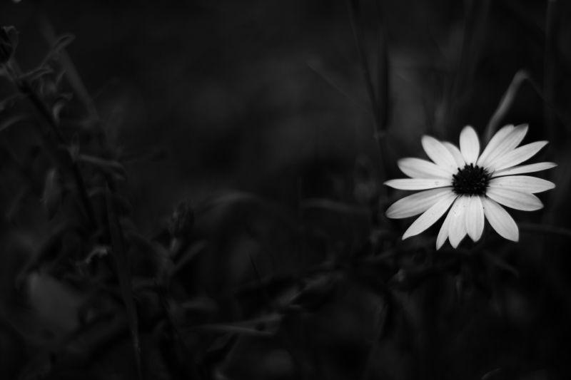 Flowers speak to me by annfrau