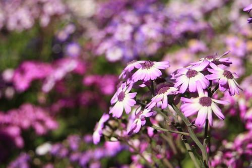 In full Bloom | by C.Ellul