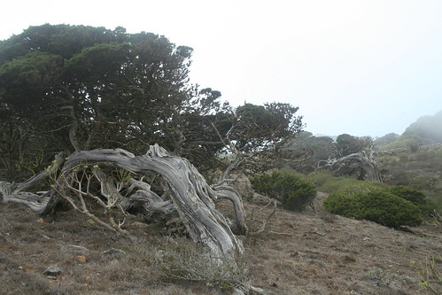 El Sabinar