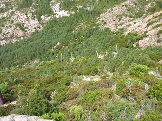 Montée au col 750 m : bas du versant W de Punta Russa vers le ruisseau de Cervi