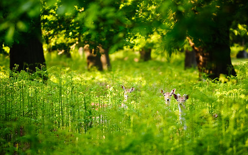 morning trees england nature fairytale forest sunrise landscape countryside kent spring woods nikon bokeh wildlife deer ethereal wonderland storybook magical 70200 f28 enchanted d3
