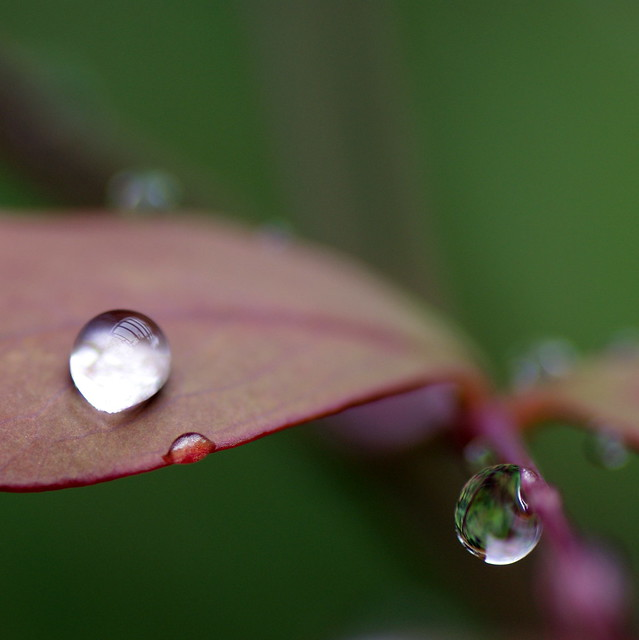 Playing with the raindrops