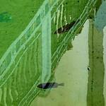 reflection on gator pond