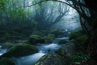 Mononoke forest, Yakushima island   by caseyyee